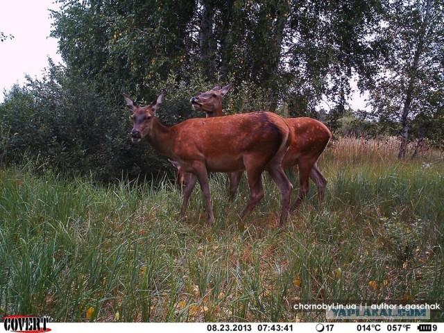 Animals Of Pripyat