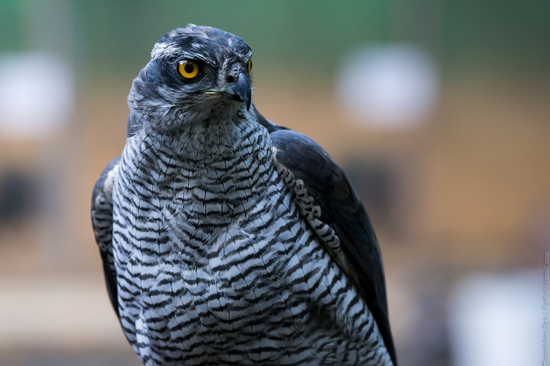 Ornithological Zoo In Moscow