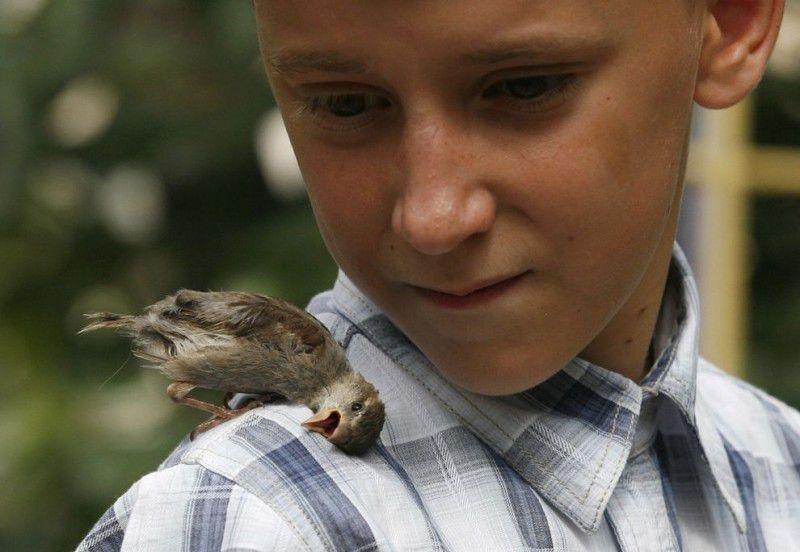 Unusual Friendship: Boy And Bird