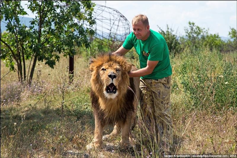 Ukrainian Safari