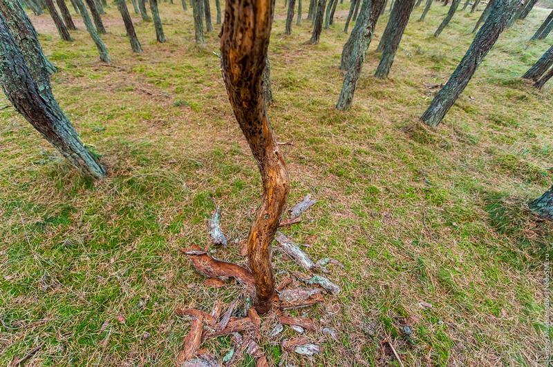 Anomalous Zone of Dancing Trees