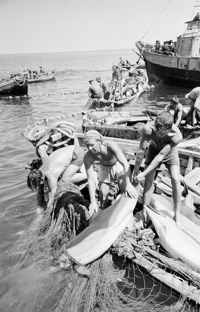 Postwar Hunger And Dolphin Catchers