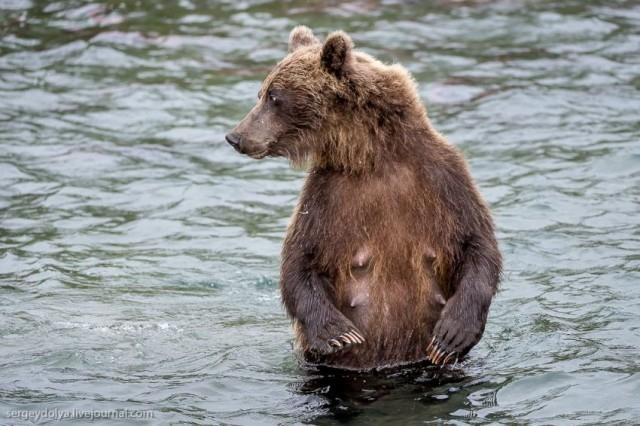 Bears Go Fishing