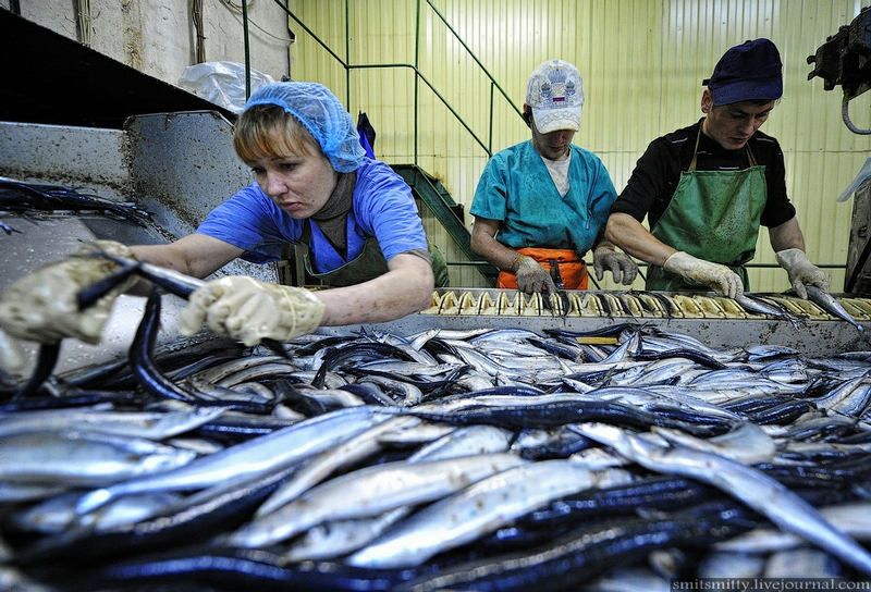 Fish Cans Making in Russia