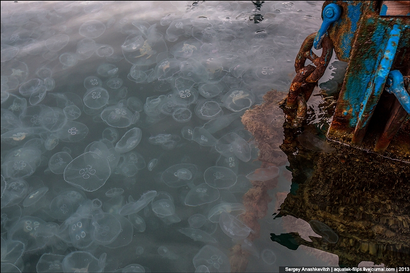 The Bay Invaded by Jellyfish