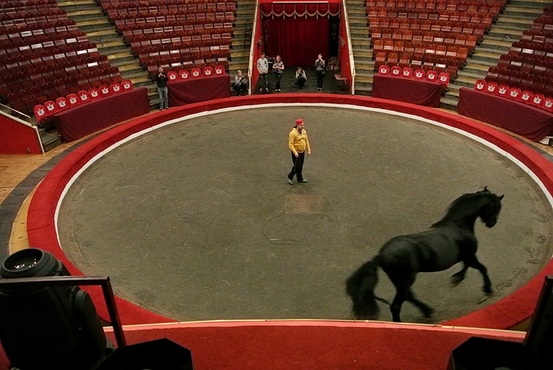Is the Circus Really a Cruel Place? Lets Find It Out!