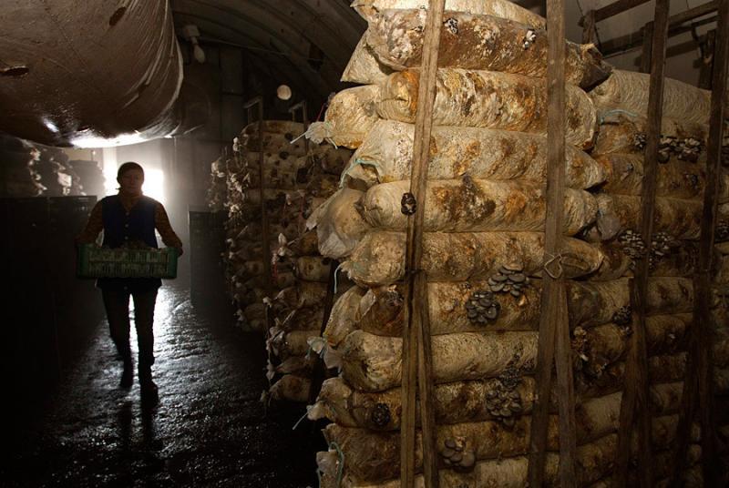 mushrooms in belarus 10