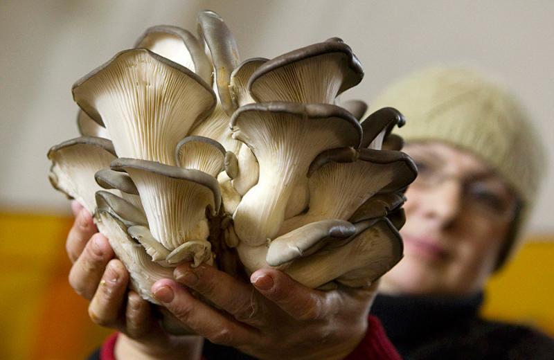 mushrooms in belarus 12