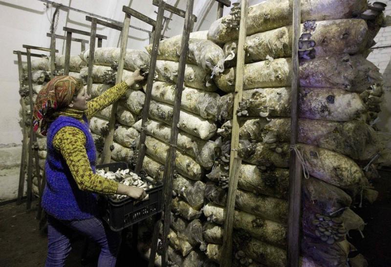mushrooms in belarus 13