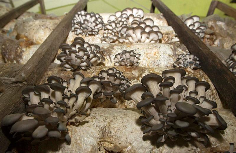 mushrooms in belarus 14