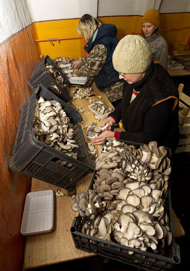 mushrooms in belarus 16