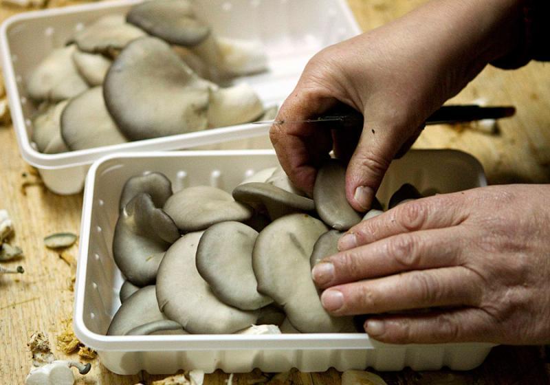 mushrooms in belarus 17