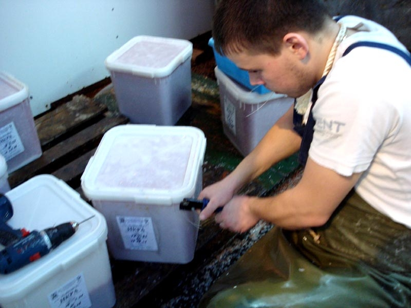 Generous Kamchatka: Caviar Making