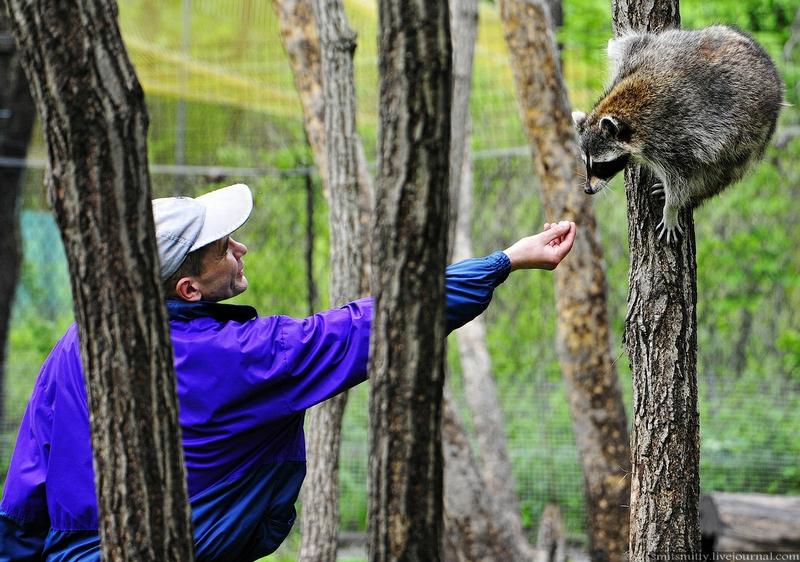 Russian Safari Park