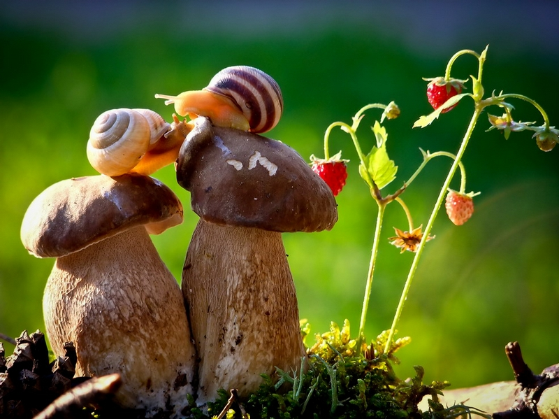 The Tiny World of Snails