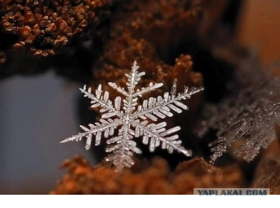 The Magic World of Snowflakes