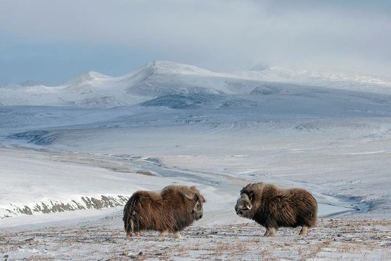 Beauty of Wrangel Island