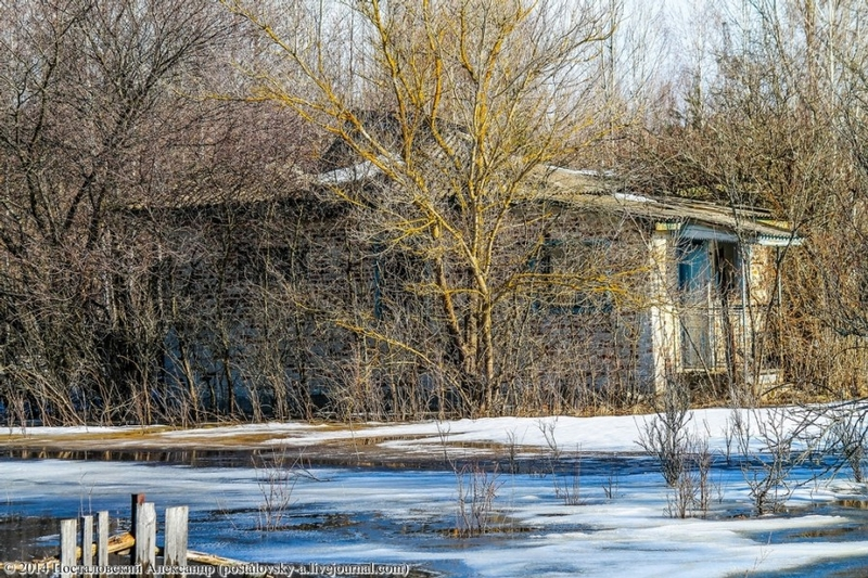 Wet Spring In the Exclusion Zone of Chernobyl