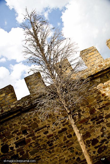 Genoese Castle 19