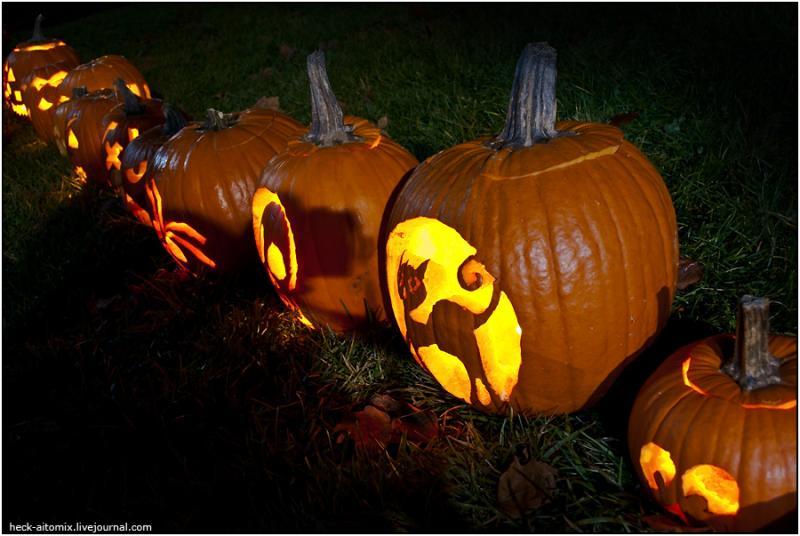 Toronto Pumpkins 11