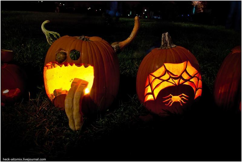 Toronto Pumpkins 6