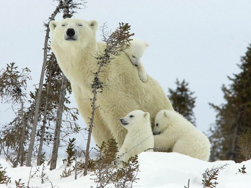 Loving Parents In the Animal World