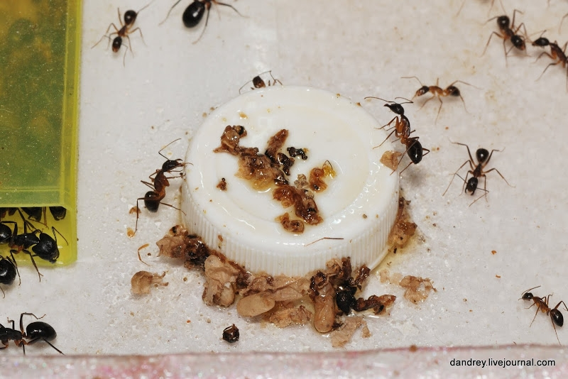 Ants At Home, Part II