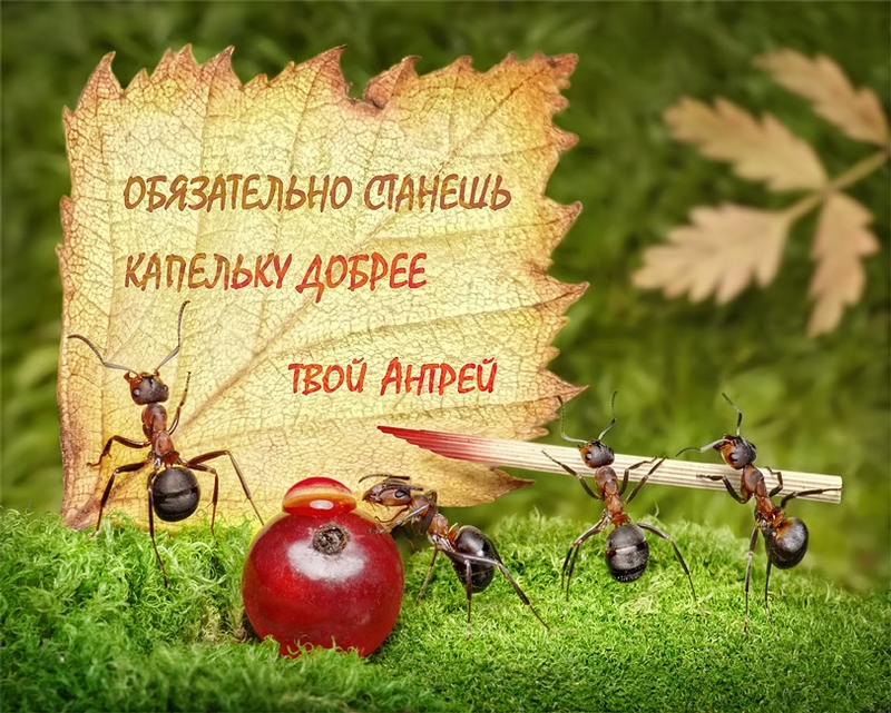 Ant Tales By Andrey Pavlov