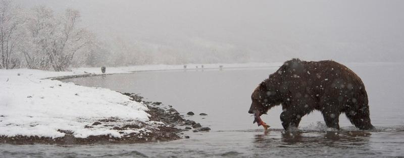 Dwellers of Kamchatka, Part II