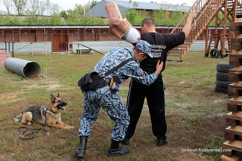 Four-Leggers Against Crime