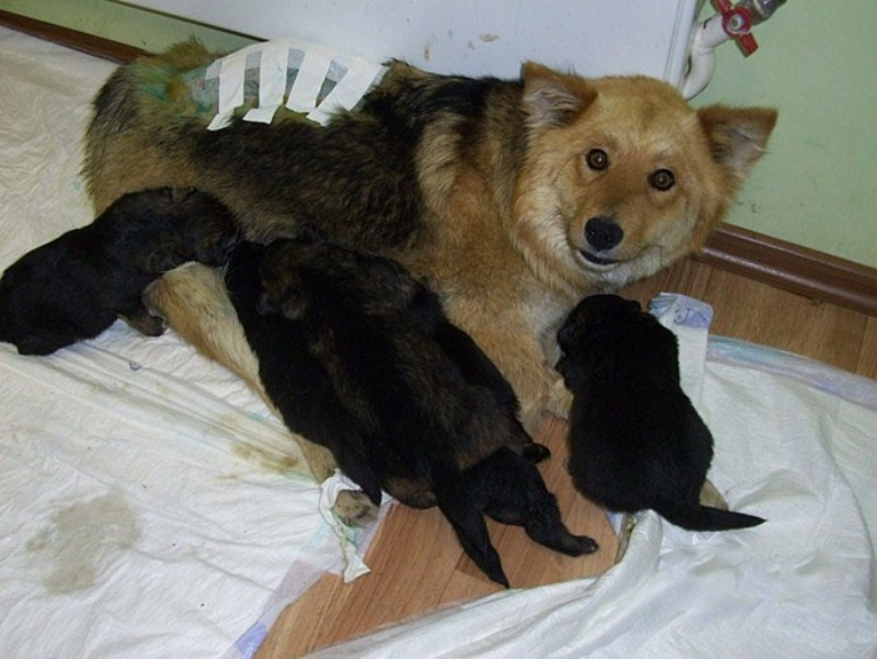 Mother Will Never Leave Her Children