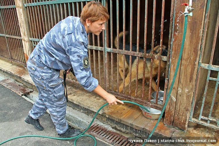 Life of Police Dogs In Moscow