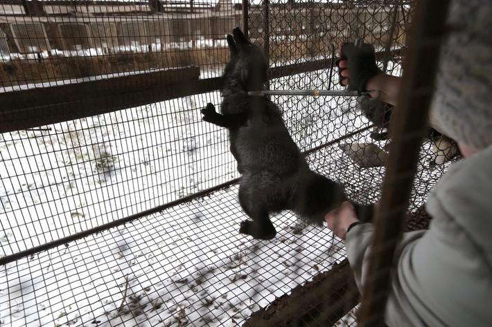 Fur Farm 10