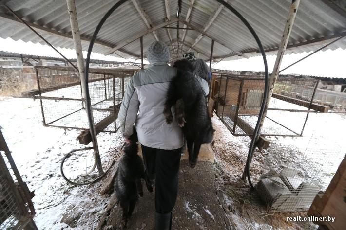 Fur Farm 11