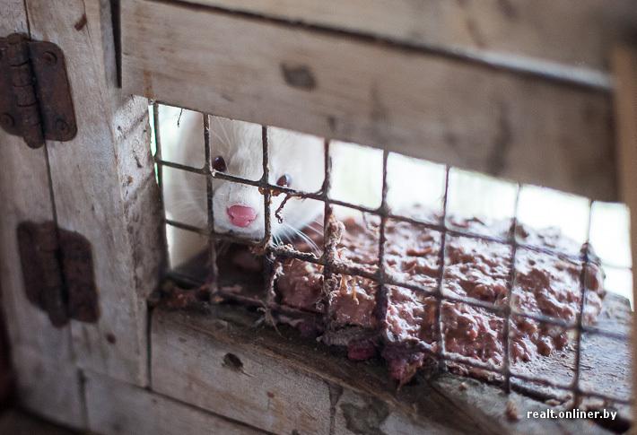Fur Farm 12