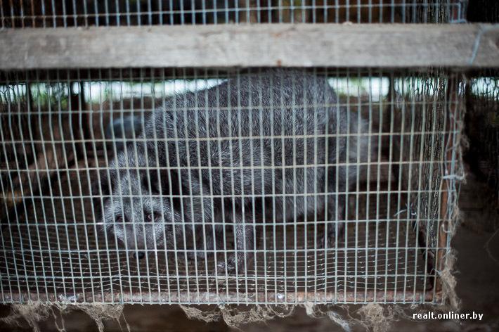 Fur Farm 14