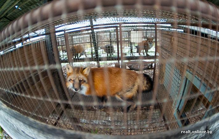 Fur Farm 15