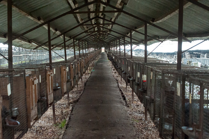 Fur Farm 2