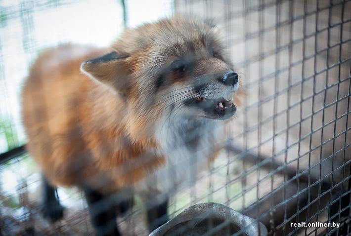Fur Farm 25