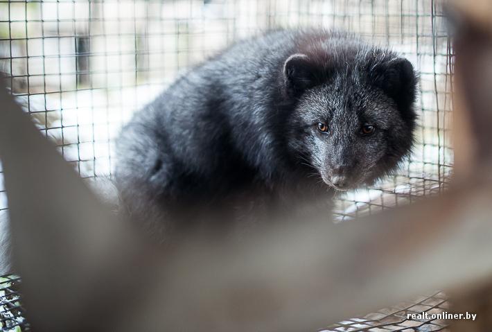 Fur Farm 3