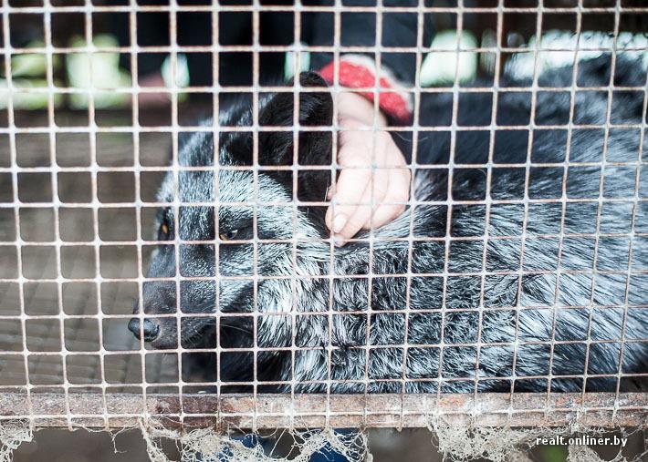 Fur Farm 5