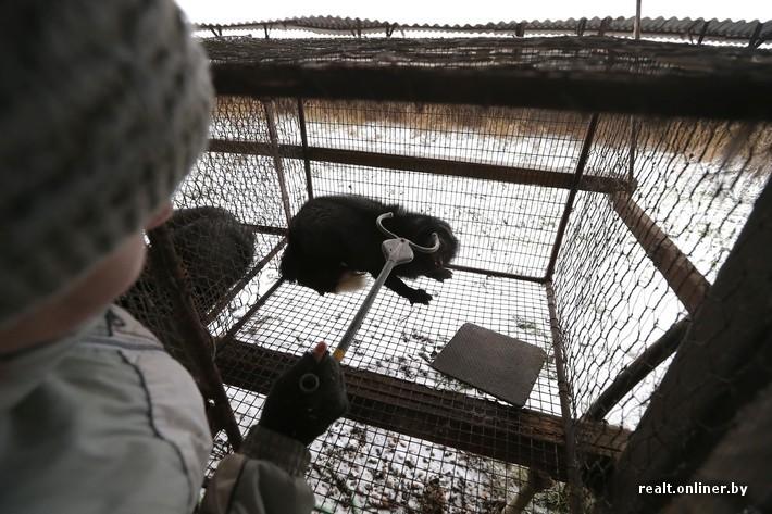 Fur Farm 9