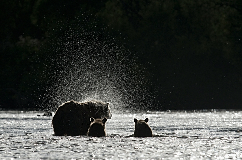 Bears of Kuril Lake