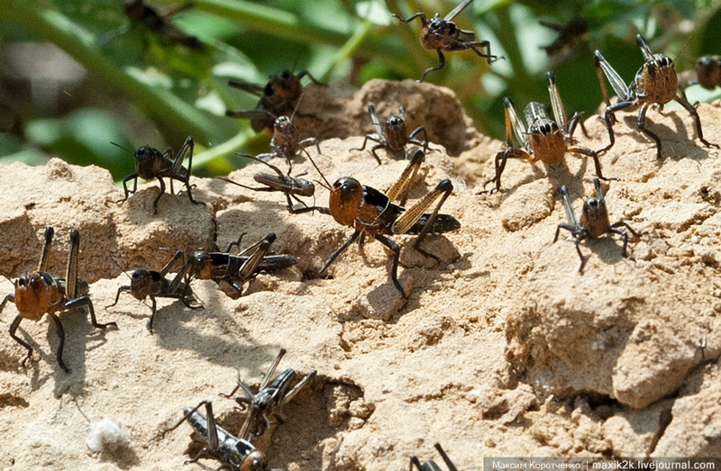 Fighting the Swarms of Locusts