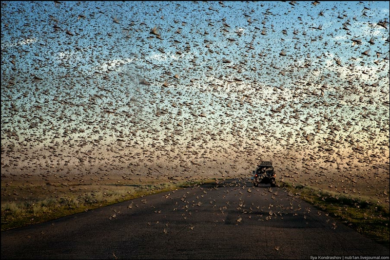In the Clouds of Locusts