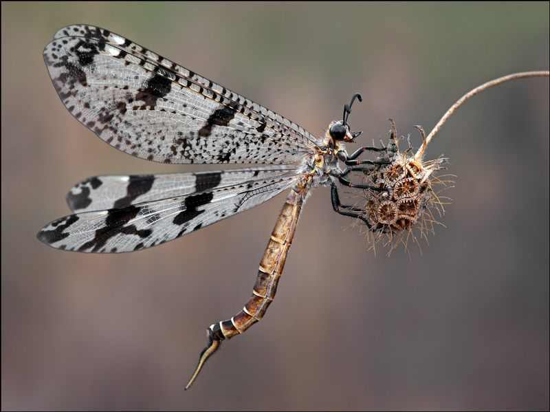 Photos Of Insects By Ilya Lutsker