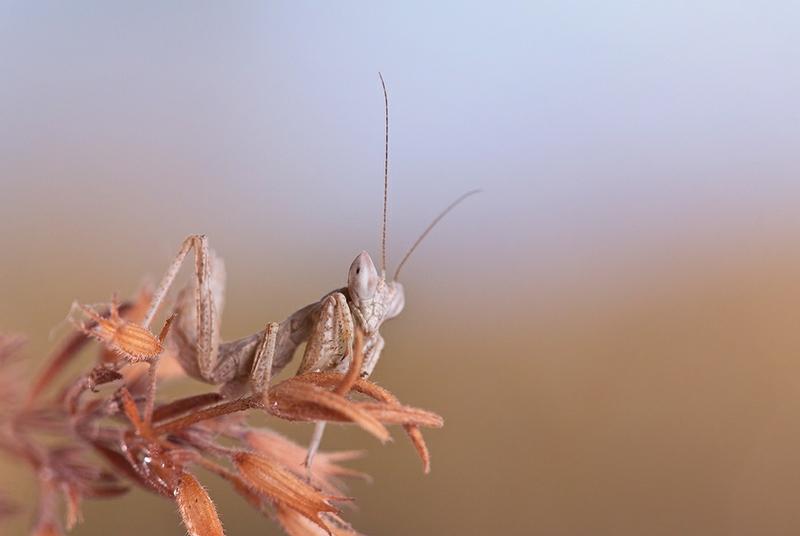 Insect Macro World