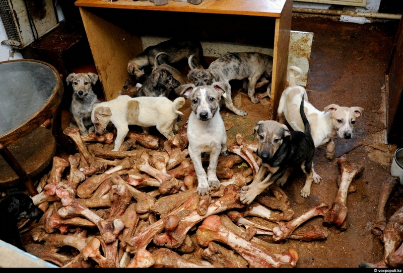 50 Dogs In One House