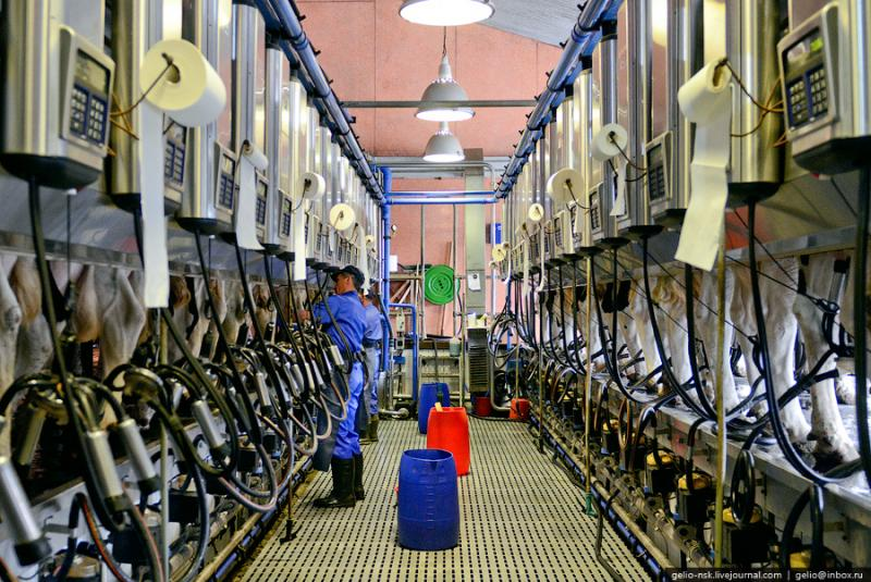 Milk Production 7
