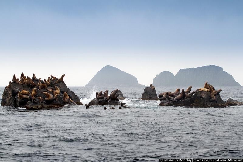 Tour to The Far Russian Desert Island [30 photos]